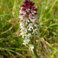 Orchide e 1